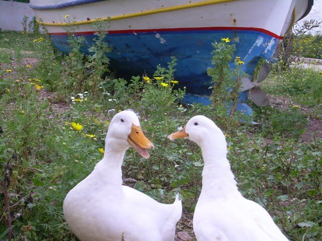 I distinctly heard one of them say it was a ducking mess